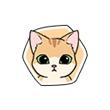 小森生活小橘猫